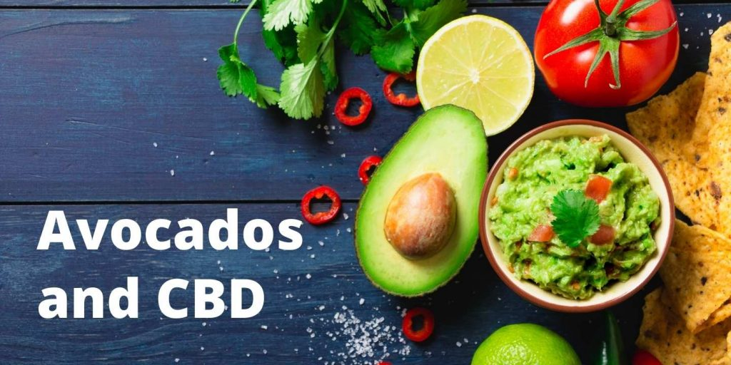 avocados and CBD are a superfood dreamteam