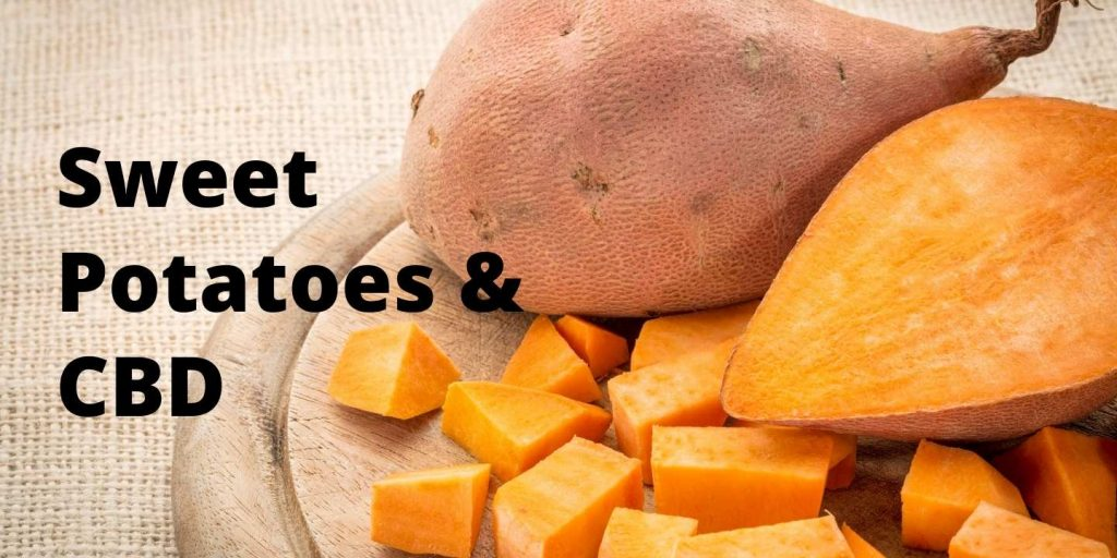 Sweet potatoes combined with CBD are a great way to get to a healthier life