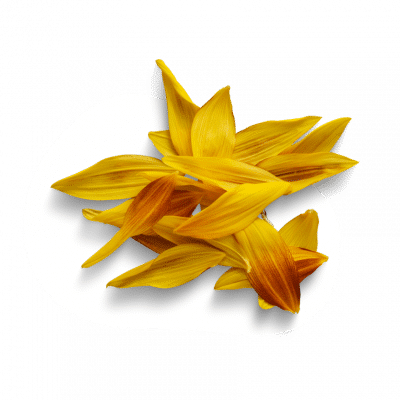 organic-sunflower-oil