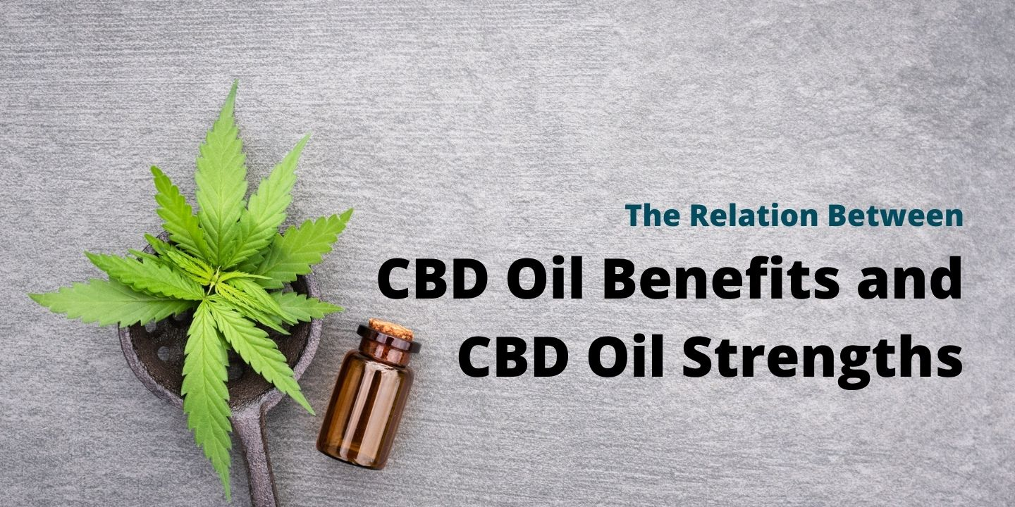 A bottle of CBD next to a cannabis plant used for CBD oil.